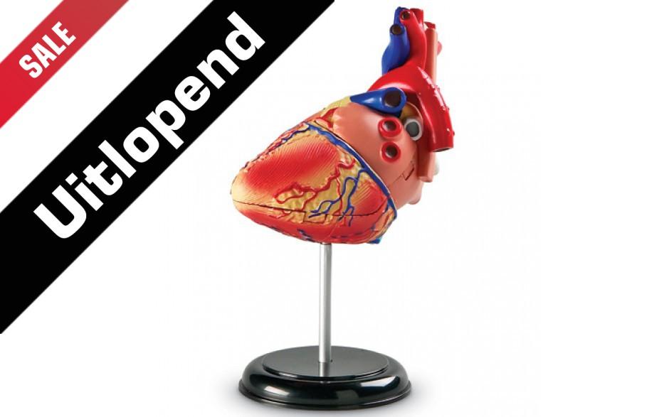 """Anatomiemodel """"Hart"""""""