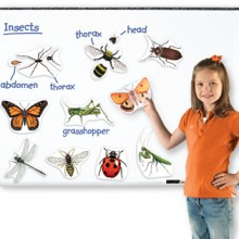 Magnetische insecten (uitlopend)