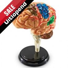 """Anatomiemodel """"Hersenen"""""""