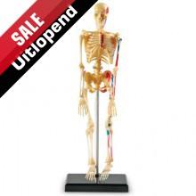 Model van een skelet